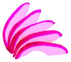 Waninashi